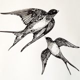 Swallows, pen on paper, 2012